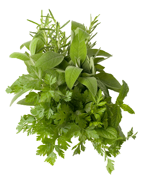 1staidherbs.png