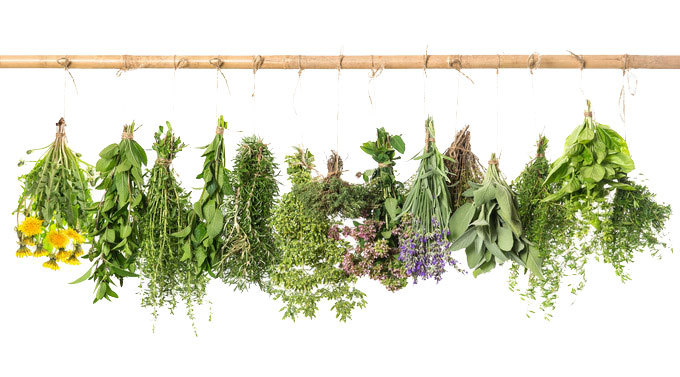 Herbs-on-the-line